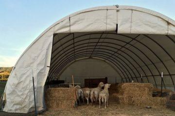 Hayvan Çadırı